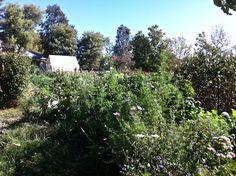 Biodynamic Gardening, Organic Recipes, Rid, Archive, Campaign, Articles, Plastic, Content, Medium