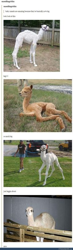 "Sixteen Wholesome Memes Featuring Adorable Animals - Funny memes that ""GET IT"" and want you to too. Get the latest funniest memes and keep up what is going on in the meme-o-sphere. Cute Funny Animals, Funny Animal Pictures, Funny Animal Memes, Funny Cute, Funny Memes, Hilarious, Llama Pictures, Animal Funnies, Animal Quotes"