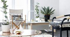 Grønne planter gir oss både oksygen og den hjemmekoselige følelsen! Nå er det på tide å pynte hjemmetmed dem igjen. Frisk opp huset før høsten virkelig kommer, og kjøp inn friske planter. Det kan rett og slett endre hele rommet! Men, hva skal du velge? Vi gir deg en liten oversikt. LES OGSÅ: Blomsten du også kan spise