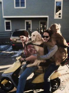 Bill, Tom and Doggys