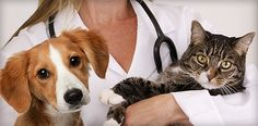 Find the best veterinary hospital