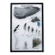 KIT: Feather diversity display - Various types of feathers in display case Diversity Display, Types Of Feathers, Science Curriculum, Children's Literature, Display Case, Kit, Glass Display Case, Display Window, Parenting Books