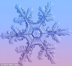 Stunning: Timofey Cherepanov, from Moscow, Russia, spends hours taking these macro photographs of snowflakes
