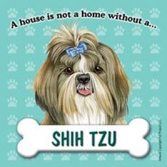 A house is not a home without a Shih Tzu Artwork of Tomoyo Pitcher x Square Fridge Magnets: Site Title Shitzu Puppies, Tiny Puppies, Yorkies, Shih Tzu Puppy, Shih Tzus, Animals And Pets, Cute Animals, Funny Animal Videos, Dog Gifts