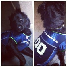 Every part of your family can be sporting Seahawks http://shwks.com/PSPets