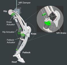 Sensors   Free Full-Text   On the Biomimetic Design of Agile-Robot Legs
