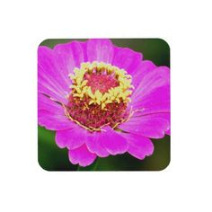 Pink and Yellow Zinnia Flower Drink Coaster