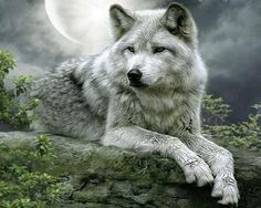off the howling for wolves with Native Drums facebook page..  .. Please keep credit if one is on picture.. thanks!