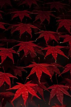 Red leaves - nature and jewellery are one