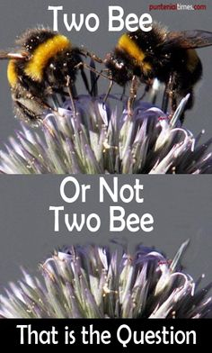 """""""Two bees or not two bees, that is the question"""". See a swarm more bee puns at puntenial times Funny School Pictures, Funny Sports Pictures, Funny Photos, Animal Puns, Funny Animals, Animal Humor, Minions Funny Images, Minions Quotes, Funny Minion"""