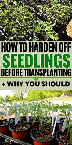 How to Harden Off Plants Before Transplanting to the Garden Are you ready to plant your crops in the garden? Learn how to harden off plants before transplanting them to ensure a healthy transition to ouside life. Garden Landscape Design, Garden Landscaping, Growing Plants, Growing Vegetables, Farm Gardens, Outdoor Gardens, Gardening For Beginners, Gardening Tips, Gardening Books