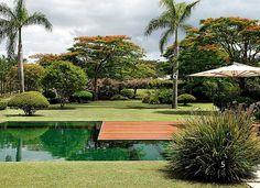 A piscina é revestida de mosaico de vidro verde-escuro, da Vidrotil, com deque de ipê. Para quebrar sua linearidade, Leo usou apenas um maciço de moreia (5). Segundo o paisagista, a planta da família do capim dá um ar descabelado ao jardim, menos simétric (Foto: Casa e Jardim)