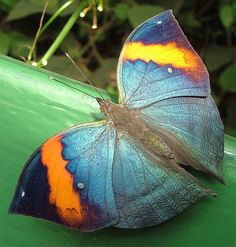 Butterfly  ✮ www.pinterest.com/WhoLoves/Animals ✮ #animals