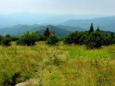 Andrews Bald, Great Smoky National Park, North Carolina