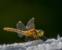 Photo by WestEndPhotography My Photos, Animals, Animales, Animaux, Animal, Animais