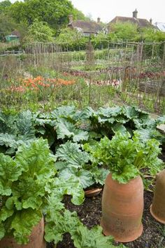 The kitchen garden at Perch Hill