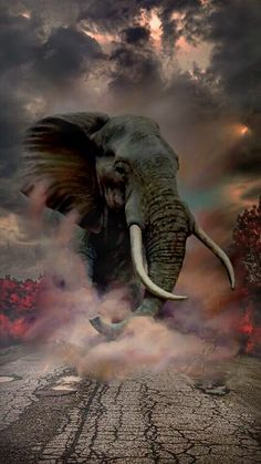 Cb background and png: 100 best hair png backgrounds for picsart 2019 Desktop Background Pictures, Studio Background Images, Black Background Images, Photo Backgrounds, Elephant Love, Elephant Art, Elephant Tattoos, African Elephant, Wild Elephant