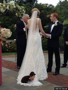 Resting on the Bride's Wedding Dress