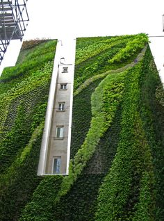 """Vertical Gardens  Der französische Botaniker Patrick Blanc machte im Alter von 16 Jahren in Thailand die Entdeckung, das Pflanzen auch ohne Erde, überall wachsen, solange sie Luft und Licht bekommen. Aus dieser Beobachtung entstand seine Idee des """"Vertical Gardens"""" und es entstand eine organische Architektur.  Mit Hilfe einer Gitterkonstruktion entstehen an Privathäusern, Garagen, Museen, Botschaften organische Kunstwerke, die das Stadtbild auf ungewohnte Weise begrünen."""