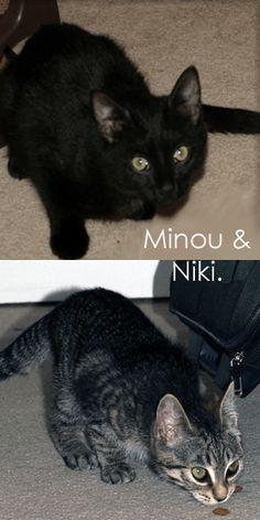 Minou & Niki