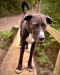 """Überleg' schneller  du sitzt im Weg."" . . . #hiking #dog # bridge #outdoors #creek #dogs Goats, Animals, Animales, Animaux, Animais, Goat, Animal"