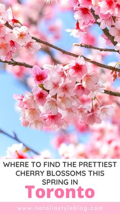 Hoping to catch a glimpse of the cherry blossoms this spring in Toronto? Here are the best spots to find cherry blossoms in Toronto from a local Travel Articles, Travel Advice, Travel Tips, Travel Destinations, Toronto Hotels, Toronto Travel, Canada Travel, Usa Travel, Travel With Kids