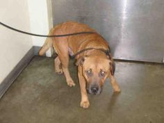A1640750 - URGENT - located at CITY OF LOS ANGELES SOUTH LA ANIMAL SHELTER in…