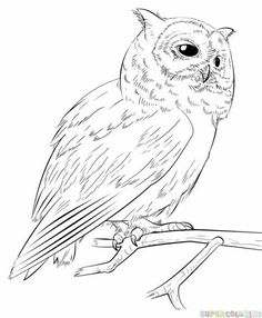 How To Draw A Realistic Owl Step By Drawing Tutorials For Kids And Beginners