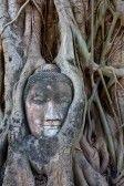 Buddha : Stone budda head in  Ayutthaya