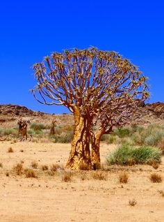 Wheretostay Namibia: Travel Planner & Routes into Namibia Quiver, Travel Planner, Cape Town, South Africa, Safari, Trips, Road Trip, Plants, Continents