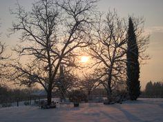 Amo questa foto del giardino innevato al tramonto!