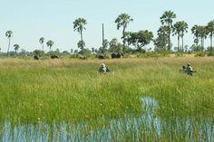 Photographic safaris to the Okavango Delta in Botswana. image: Xigera