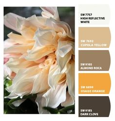 warm browns - color palette - Paint colors from ColorSnap by Sherwin-Williams. Chipcard by Reni Apostolova.