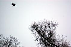 Portfolio Multimedeia: Lintubongausta: Lintu lentää, noidan oksat