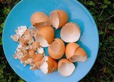 Vaječné škrupiny - prírodný zdroj minerálov Ale, Eggs, Breakfast, Health, Food, Gardening, Morning Coffee, Health Care, Ale Beer