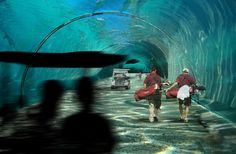 NL and Dutch Docklands have announced plans to build a floating golf course in the Maldives islands, in the Indian Ocean, with holes connected by a series of underwater tunnels. Humour Golf, Dubai World, Best Golf Courses, Quelques Photos, First World, Underwater, Places To Go, Tourism, Golf Tips