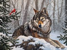 What is the wolf spirit animal meaning? Animal Painter, Animal Paintings, Animal Drawings, Wolf Photos, Wolf Pictures, Animal Pick, Wolf Hybrid, Winter Wolves, Wolf Artwork