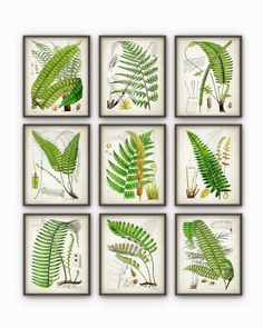 Antique Fern Botanical Art Print Set of 9 - Vintage Fern Botanical Home Decor Antique Book Plate Illustration Giclee Picture Set of 9 (AB58)