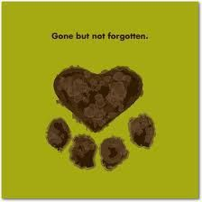 In loving memory to all the animals I have lost. Thank You for the joy you brought to my life and for your unconditional love. You are gone, but will never be forgotten as the memories will forever be in my heart. ♥