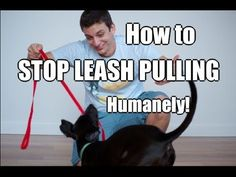How to Train Your Dog to NOT PULL on the Leash! - YouTube