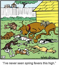 Today on Marmaduke - Comics by Brad Anderson Dog Comics, Cute Comics, Funny Animal Pictures, Funny Animals, Animal Pics, Cartoon Dog, Dog Cartoons, Bedtime Prayer, Calvin And Hobbes