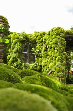 inside outside - moss garden rooftop Moss Garden, Green Garden, Garden Plants, Japanese Garden Style, Landscape Design, Garden Design, Green Facade, Green Roofs, Garden Styles