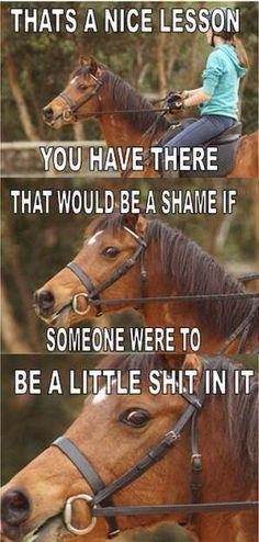 """No, my horses were thinking, """" What a boring lesson you've got there... Let's spice it up and not follow anyone's directions!"""" lol. Gotta love em"""