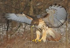 20 Marvelous Pictures of Hawks - http://www.allnewhairstyles.com/20-marvelous-pictures-of-hawks.html