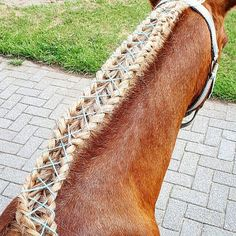 New braid I tried out. Own idea. If you make something like this put #shoelacehorsebraid under it and maybe I will give you a 2k+ shoutout . #pony #basje #shet #shetlander #welsh #shetlanderxwelsh #shetxwelsh #braid #vlecht #braids #vlechten #braided #gevlochten #2braids #2vlechten #2 #shoelace #schoenveter #shoelacebraid #blue #blauw #brown #bruin #blond #horse #paard #horses #paarden #horsebraid