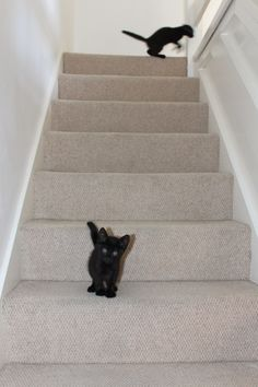 Trying the stairs