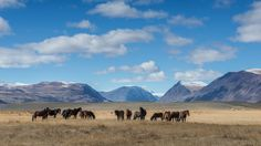 Horses in Altai Tavan Bogd by Stefan Cruysberghs on 500px