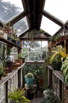 planted - glasshouse