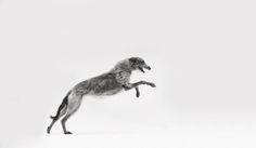Delightful Dogs | ZsaZsa Bellagio - Like No Other