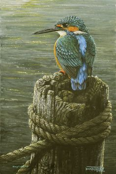 dick twinney artist | The Art of Dick Twinney - Cornish Wildlife Artist